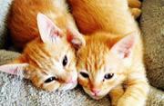 """相亲相爱""""猫咪兄弟""""的幸福生活"""