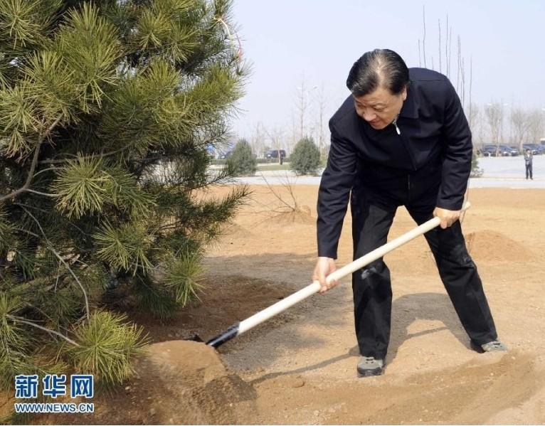刘云山在植树。(新华社记者 饶爱民 摄)