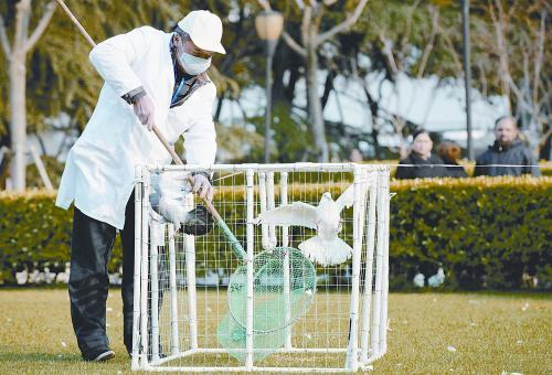 4月6日,上海关闭所有开放式鸽场。图为工作人员抓捕广场上的鸽子。