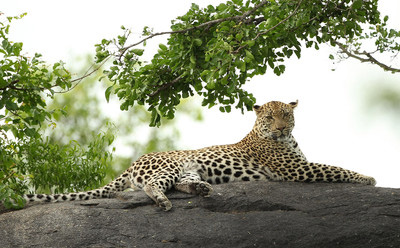 架起相机 走进非洲十大顶级国家公园