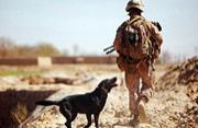 美国2012年最难忘军事照片一览