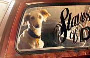 汽车里沉默的小狗:关注孤独动物