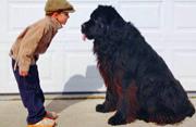 小正太与巨型爱犬亲密合影