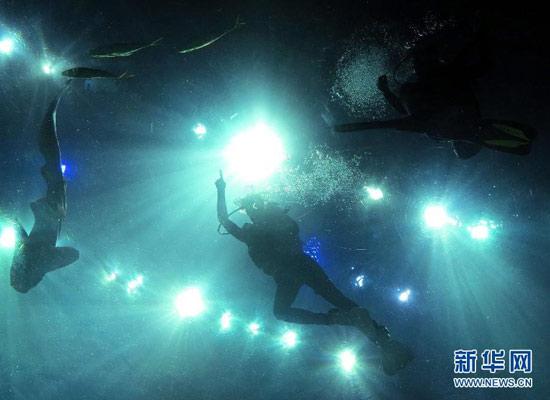香港海洋公园潜水新体验 零距离看鲨鱼(图)