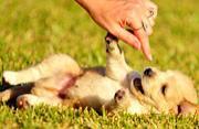 萌犬会微笑 温暖治愈人心