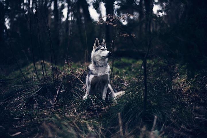 森林狂想曲