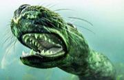 野外摄影师拍凶猛海豹露出尖牙