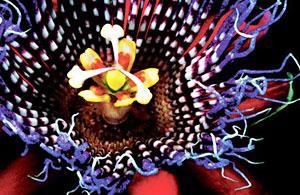 静物摄影:稀有植物