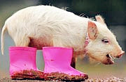 可爱动物逗趣 温暖治愈人心