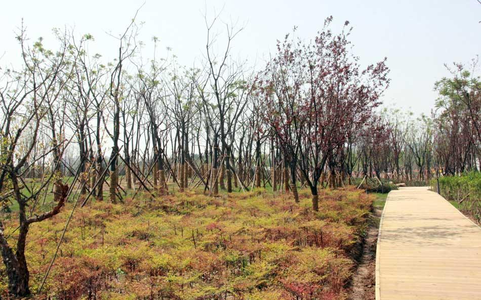西安/西安浐灞国家湿地公园将开园迎客五一去浐灞感受美景(13/17)