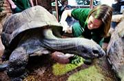 英国巨型陆龟夫妇同居40年未交配
