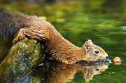 萌态松鼠竭尽全力打捞落水坚果