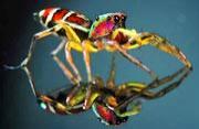 热带岛屿生物的微距摄影景观