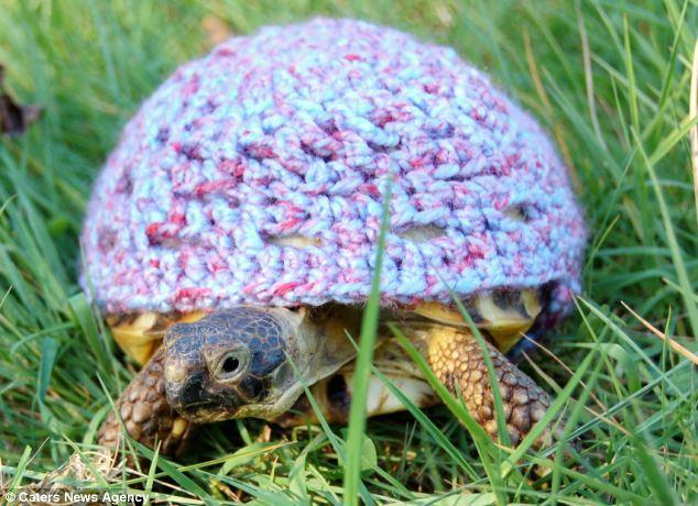 加拿大女子为宠物乌龟编织最萌套装