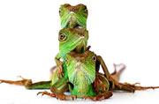 """法国少年为宠物蜥蜴拍""""全家福"""""""