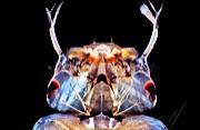 摄影师微距拍摄海洋微生物之美
