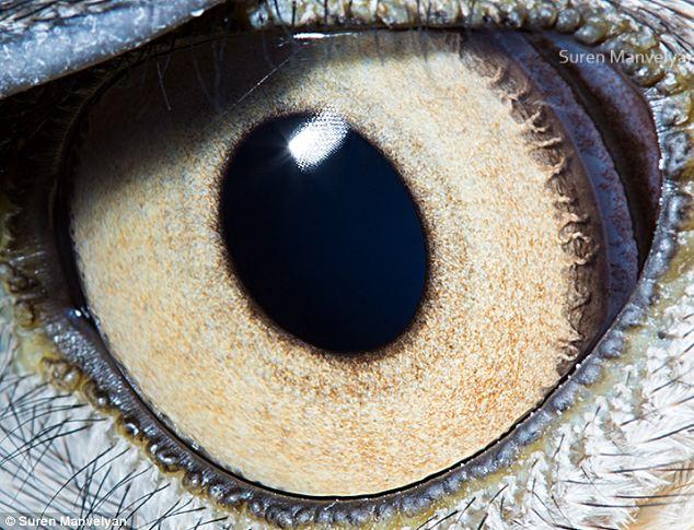 亚美尼亚摄影师近距离拍动物眼睛