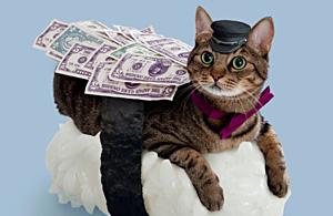 观念摄影:不能吃的寿司猫