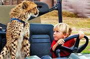 南非小兄妹与猎豹幼崽一同生活