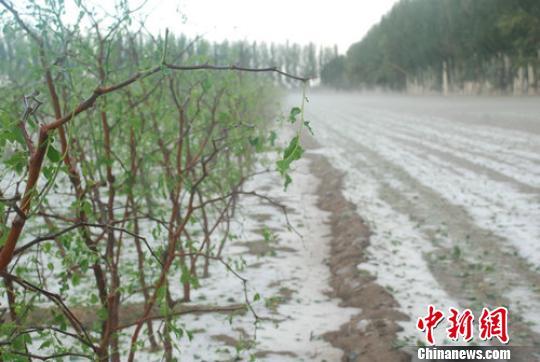 新疆生产建设兵团团场遭冰雹袭击