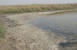 天津北大港湿地死鱼成堆 昔日候鸟乐园环境堪忧