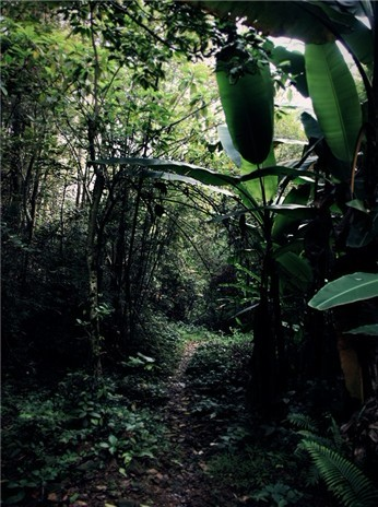 原始森林中拍摄外景地之一