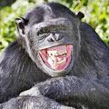 野生动物微笑上镜欢乐多