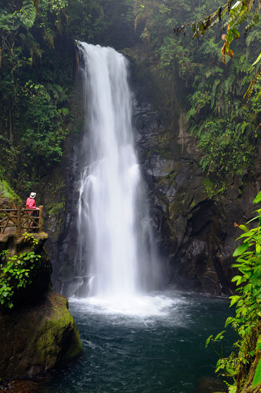 国内资讯_全球十大最美植物园_旅游_环球网