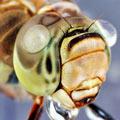 以色列摄影师微距拍昆虫世界