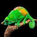 马达加斯加珍稀动植物照