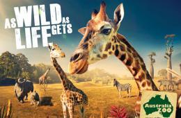澳洲动物园宣传海报:如野生般的自由日子