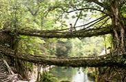 一睹世界上各种奇特的桥