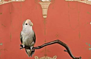 观念摄影:鹦鹉的隐身术