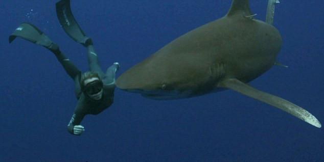 美女子深海与鲨共舞呼吁保护动物