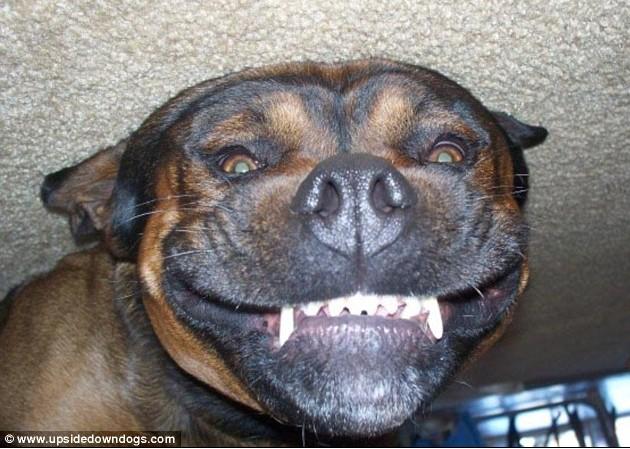 ䷹�c��#�i#ya�_围观让人捧腹的狗狗呲牙笑容_博览_环球网