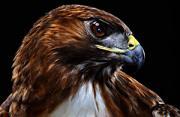 鸟类肖像:格尔夫海岸的幸存者