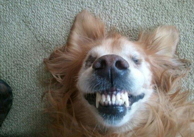 呲牙搞笑头像