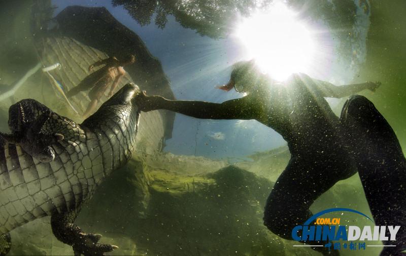 鳄鱼 致命 美女与野兽 每天 搏斗 妙龄女子/美女与野兽:妙龄女子每天与致命鳄鱼搏斗。