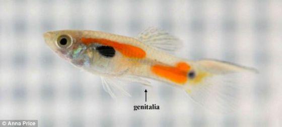 鱼的内部结构简图