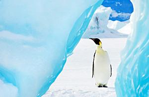 风光摄影:企鹅成长日记