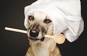 动物肖像:狗狗心事