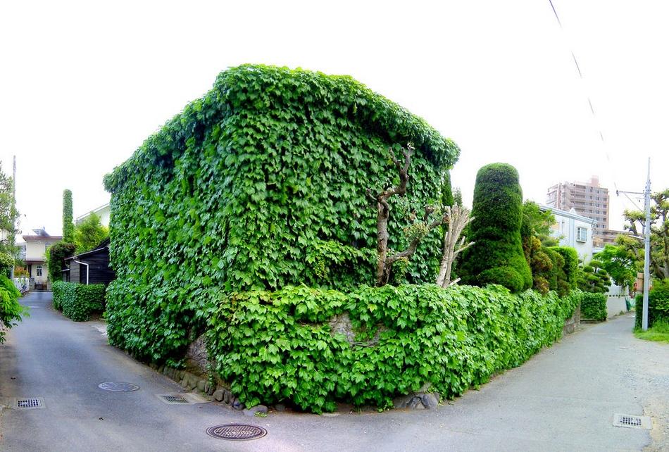 全球被植物覆盖的优雅建筑 - 浪子心声 - 浪子心声