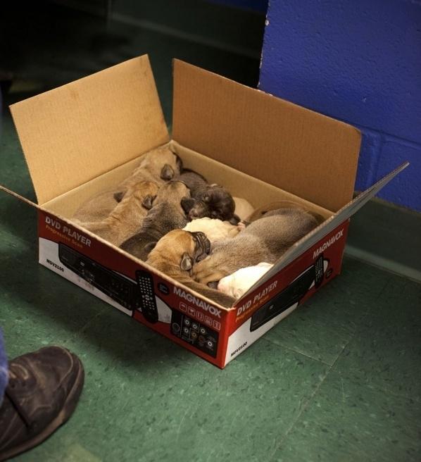 动物 生活/动物们在收容所里的悲惨生活(11/28)...