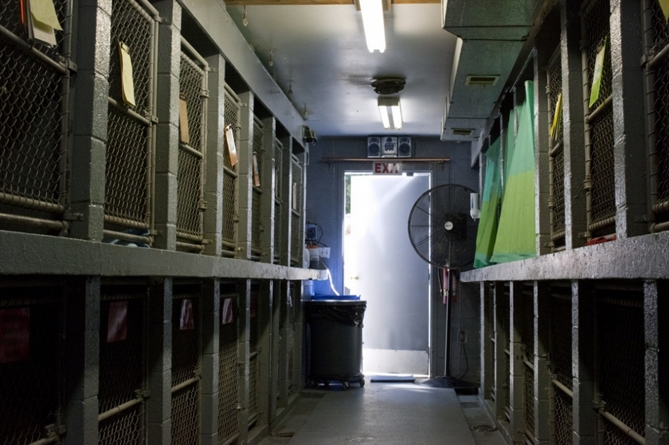 动物 生活/动物们在收容所里的悲惨生活(25/28)...