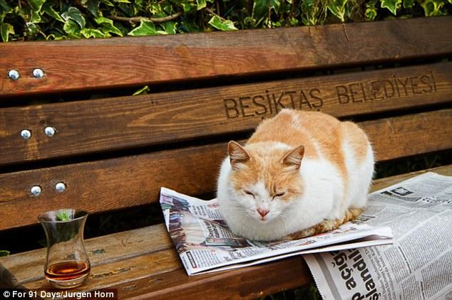 在伊斯坦布尔 转角遇见喵星人