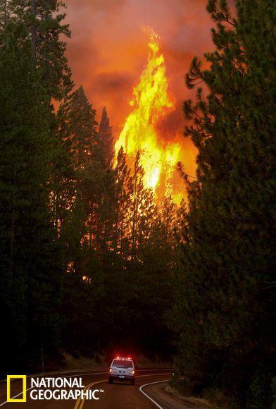 美国森林野火阻击战:野生动物穿公路逃离