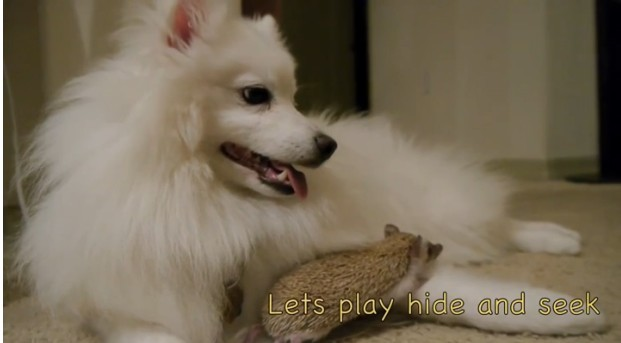 """斯基摩宠物犬和睦相处,让主人十分心疼.  Tamang说,"""""""