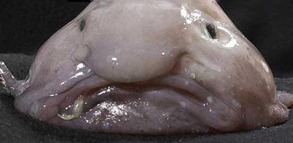 寻找全世界最丑陋的动物