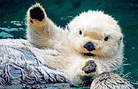 温暖治愈系:动物萌仔们爱的抱抱