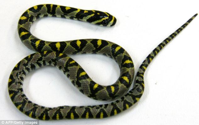 可爱小蛇图片真蛇